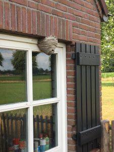 wespennest verwijderd in Breda